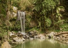 Curtis Falls, Mt Tamborine (Serbian Fence Jumper) Tags: gold coast nikon falls mount curtis tamborine d5100