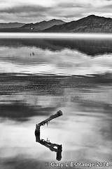 Reflections on the Salton Sea (garylestrangephotography) Tags: california sea sky blackandwhite usa white lake black reflection bird beach water clouds canon reflections salton garylestrangephotography