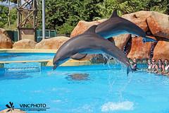 SAUT DAUPHIN (vincphotography) Tags: dauphin marineland ocan antibe annimaux