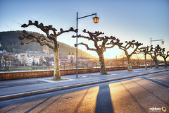 Neuenheim Promenade with Old Town (Heidelberg) (Andy Brandl (PhotonMix)) Tags: street city trees winter sky germany alley nikon shadows heidelberg altstadt hdr d800 longshadows goldenlight badenwürttemberg neuenheim platanen altebrücke photonmix