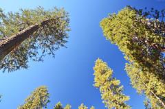 Yosemite Valley (Iyhon Chiu) Tags: california nature unitedstates yosemite yosemitenationalpark   yosemitevalley       2013   d7000