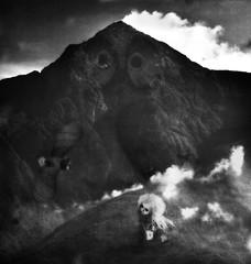 Nel Regno dei Gufi - In the Land of Owls
