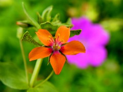 Flower in DOF