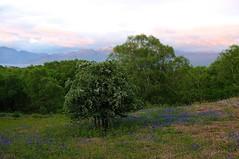 the remains of the day (Senaid) Tags: sunset mountains tree bluebells evening scotland interestingness highlands woods nikon isleofskye scottish hawthorn knoydart armadale soundofsleat explored d5000 dubhard