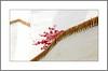 Hinter Mauern  (Behind walls) (alfred.hausberger) Tags: blumen bougainvillea andalusien spanien blüten mauern linien weis frigiliana updatecollection minimalistmus