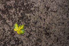 Yellow And Green On Brown (Photograaff) Tags: brown green leave yellow colorfull ground dirt