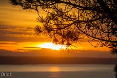 Baie de Saint-Brieuc - Explored (Oric1) Tags: coucher de soleil 22 canon ctesdarmor france manche planguenoual arbre armorique breizh bretagne brittany eos ff maritime pin plage sea sunset coucherdesoleil
