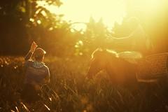 _MG_8399 (jeridaking) Tags: pineapple harvest ormoc horse sun rays people farmers biliboy sal ralph matres jeridaking fortheloveofphotography leyte visayas philippines pinoy filipino
