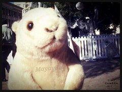 Dia del Fotgrafo (mayavilla) Tags: sanantonio frenteallamo perritodelapradera plaza cynomys peluche diciembre selfie linecamera perrito mueco juguete toy