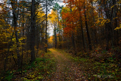 Bittersweet (Thousand Word Images by Dustin Abbott) Tags: canonef1635mmf28liiiusm autumn lens woods painterly path adobelightroomcc 2016 fall ortoneffect dustinabbottnet thousandwordimages review alienskinexposurex2 photography petawawa pembroke fullframe forest canoneos5dmarkiv comparison ontario canada hiking canon5d4 adobephotoshopcc photodujour dustinabbott ca bittersweet