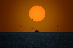The Last Pirate (Carlos Gotay Martnez) Tags: sky sea birds sunset sun light ocean abstract summer ship horizon art seascape zoom fineart pelicans pirateship telephotolens