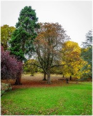 Autumn Trees (tina777) Tags: autumn trees branch trunk leaves grass ononesoftware topazadjust romilly park barry vale glamorgan wales