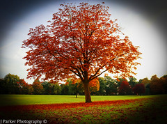 Season of Change (jamesparker13) Tags: autumn colour change red green nature fall photoshop canon beautiful tree dying leaves
