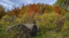 Autumn Colours (Paul B0udreau) Tags: syb autumn fall colours haltonhills nikkor1855mm photoshop canada ontario paulboudreauphotography niagara d5100 nikon nikond5100 raw layer