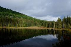 Rainy day at Mt Hood (jamcconahay) Tags: mthood trilliumlake reflection