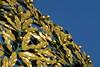 L1150071 (Maharepa) Tags: wien vienna austria österreich museum secession jugendstil gold flowers blumen ranken