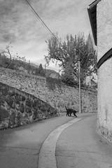Rabat-les-Trois-Seigneurs (Stanza 61) Tags: rabat saurat tarascon monochrome blackandwhite village france mountains dog ariege arige rabatlestroisseigneurs path road