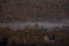 Autumn Mist (Klaus Ficker --Landscape and Nature Photographer--) Tags: fog nebel sunrise autumn usa kentucky frankfort kentuckyphotography klausficker canon eos5dmarkii landoflandscapesmagazine landoflandscapesexpo