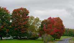 Cantons de L'Est Chemin Fairfax near Stanstead (cbaarch) Tags: quebec cantonsdelest easterntownships automne fallcolours