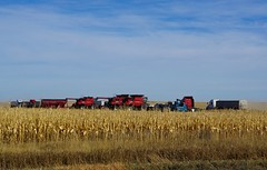 Lined Up For The Harvest (pam's pics-) Tags: ks kansas us usa midwest sonya6000 rural farm farming harvest harvesting fall autumn pamspics pammorris prairie
