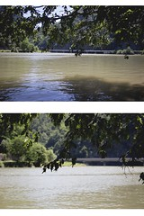 riverside leaves (ConcreteLies) Tags: riverside river water murky muddy leaves tree green summer diptych reflection sparkling