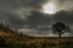 The storm is coming (marielledevalk) Tags: outdoor sky clouds sun landscape field storm country holland dutch tree sunshine