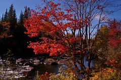 Val-David - rivire du Nord 12 (luco*) Tags: canada qubec laurentides valdavid val david rivire du nord river forest fort automne fall arbre tree maple red rable rouge couleurs