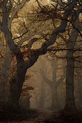 Quiet (lindyginn) Tags: ethereal forest quiet dark light plant trees foggy misty path fairytale ipad art mobile browns dreamy dreams surreal ginn