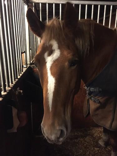 Polara the horse
