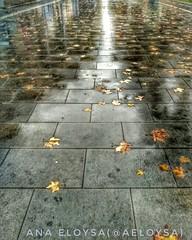 un dia pasado por agua (Ana Eloysa) Tags: agua zaragoza zgz reflejo hojas mojado hdr contraste movil aeloysa anaeloysa