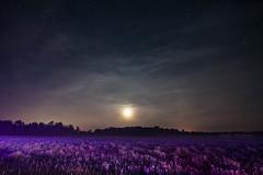 Violet Field (Matt Molloy) Tags: mattmolloy photography night sky stars moon cirrus clouds mist purple grass field dandelions trees violet ontario canada landscape lovelife