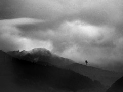 (sparth) Tags: or oregon sparth fog brouillard foggy tree minimalism minimal telephoto blackwhite blackandwhite bw noirblanc noiretblanc nb dscwx300 sony 2013