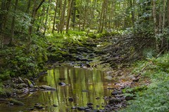 Forest Reflections (Devin Boggs) Tags: nature woods trees hiking clouds streams