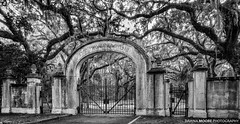 Wormsloe Gate, Savannah, Georgia (DawnaMoorePhotography) Tags: georgia history odocoileusvirginianus photography quercusvirginiana road serene southern spanishmoss tourist attraction avenue avenueofoaks blackandwhite coastal colonial dawnamoorephotography dawnamoorephotographycom destination historic historicsite image isleofhope landscape lane lined liveoak location nature noblejones oak outdoors path peachstate photo photograph picture savannah scenic southeast southernliveoak statepark tourism travel usa wormsloeplantation unitedstates us