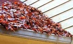 Full Gutters (Reid2008) Tags: gutters leaves autumn autumnleaves fall