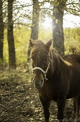 cheval (yannick_gagnon) Tags: animaux animal cheval horse