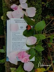 16 novembre 2016 ... (adrianaaprati) Tags: poesia poesie mariangelagualtieri letteratura rosaantica rosa versi libro compleanno birthday poet poetry poetic book composizione composit