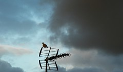 Dove silhouette (Martha-Ann48) Tags: weather storm clouds sunlight silhouettes sky brooding collard dove blue black tv aerial inside looking out