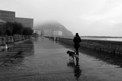 Día de niebla (no sabemos cómo llamarnos) Tags: fog niebla perro chien dog donostia sansebastián street streetphotography paseo photoderue fotourbana solitude soledad loneliness blancoynegro blackandwhite noiretblanc kursaal