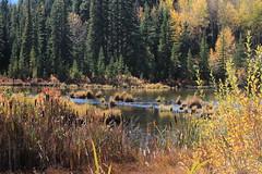 IMG_9786 (ctmarie3) Tags: banffnationalpark vermilionlakes thirdvermilionlake