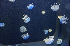 California sciences museum (jmarnaud) Tags: usa california summer family 2016 san francisco museum sciences aquarium fish colors people