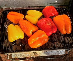 Thanksgiving peppers (mattrudoff) Tags: backyard cooking grill hibachi charcoal orange yellow red bellpepper instagramapp square squareformat iphoneography ludwig