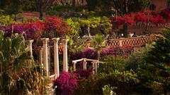 Taormina, a breakfast in paradise. (rinogas) Tags: italy sicily taormina garden summer rinogas
