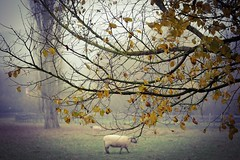 ...enchanting autumn... (*ines_maria) Tags: nature lamp tree dof panasonic dmcgx8 colour autumn