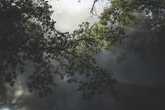 Riflessi (sdrusna79) Tags: reflexes riflessi nikon paesaggio landscape piante trees leaves foglie green fog