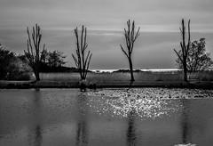Lazy afternoon (alain01789) Tags: water eau lac lake monochrome noiretblanc trees arbres clouds nuages ciel sky sun soleil landscape velvia bw