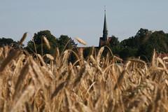 20130720_IMG_0106 (anriro96) Tags: elements heemsen nienburg feld ernte gras getreide blau blue sky rohrsen weser sun summer