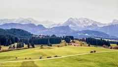 Bavarian landscape (Sparkassenkunde) Tags: landscape bavaria bayern mittelformat mamiya 645 120 film analog buyfilmnotmegapixels find rural landwirschaft wiese berge mountains alpen alps velvia fuji fujifilm