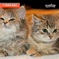Freyja and Gizmo as the cutest kittens who ever kittened.  (Jenn ) Tags: ifttt instagram