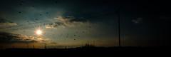2016 10 29 - Sunset-7 (OliGlo1979) Tags: fuji luxembourg xt2 xf1655 landscape sunset horse silhouette
